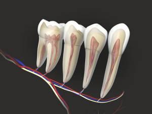 Депульпирование зуба в Минске